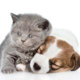 Povlak na polštářek Puppy and Kitten